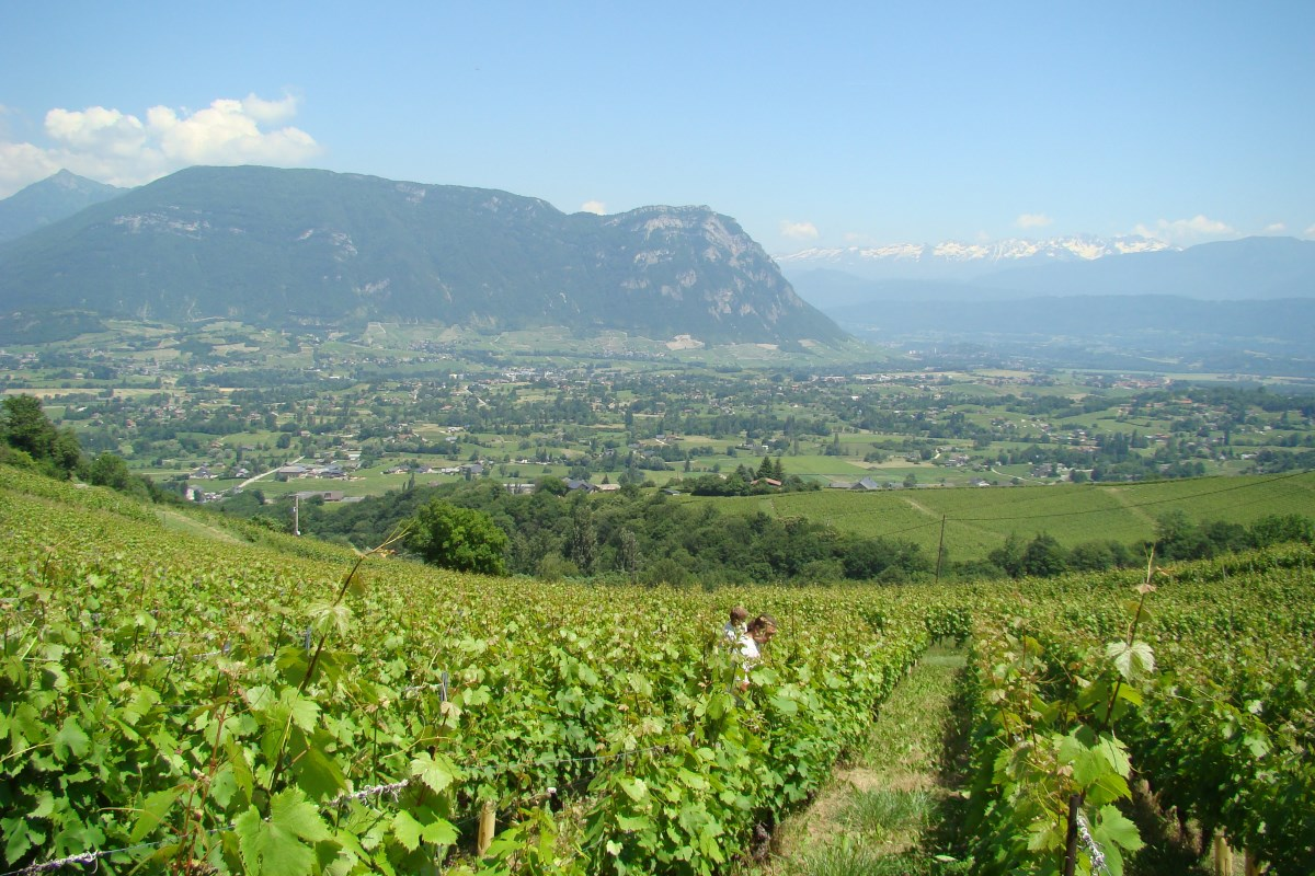 Vineyards Combe of Savoy since Apremont